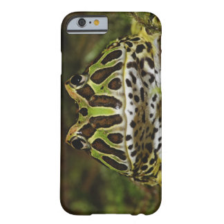 Ceratophrys cranwelli barely there iPhone 6 case