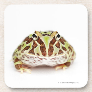 Ceratophrys Cranwelli, Cranwell's Horned Frog, Coaster