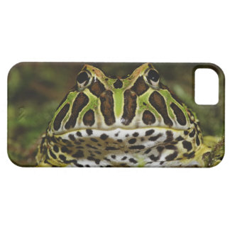 Ceratophrys cranwelli iPhone 5 cases