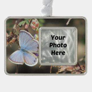 Ceraunus Blue Butterfly Silver Plated Framed Ornament