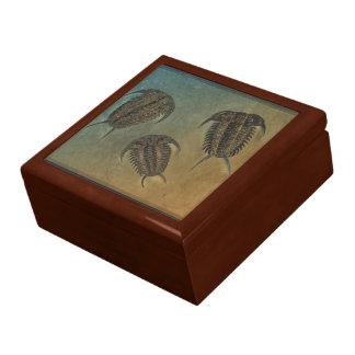 Ceraurus and Levicerurus Fossil Trilobite Gift Box