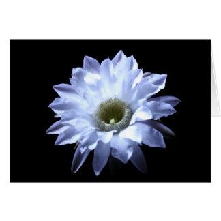 Cereus Cactus Blossom Card