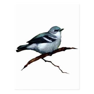 Cerulean Warbler: Bird: Oil Pastel Art on White Postcard
