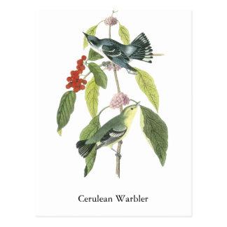 Cerulean Warbler, John Audubon Postcard