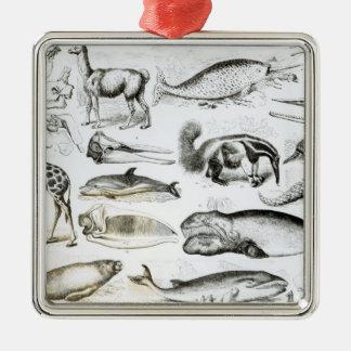 Cetacea Edentata Silver-Colored Square Decoration