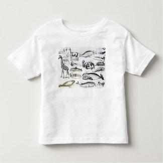 Cetacea Edentata Toddler T-Shirt