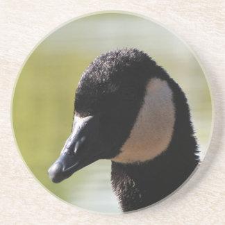 CGF Canada Goose Face Coasters
