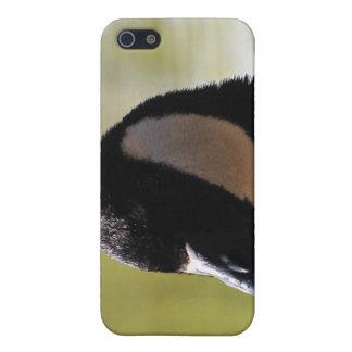 CGF Canada Goose Face iPhone 5 Cases