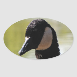 CGF Canada Goose Face Oval Sticker