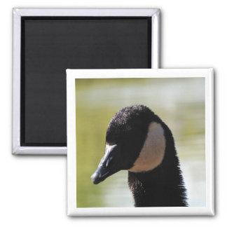 CGF Canada Goose Face Square Magnet