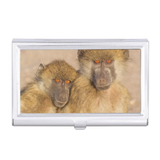 Chacma Baboon, two subadults in the early morning Business Card Holder