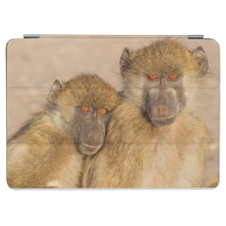 Chacma Baboon, two subadults in the early morning iPad Air Cover