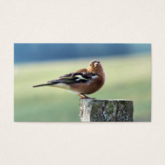 CHAFFINCH BUSINESS CARD