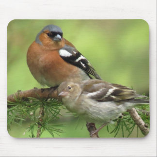 Chaffinch family mouse mat