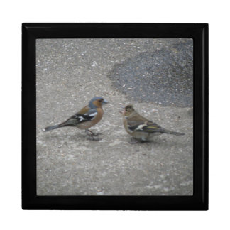 Chaffinch Feed Me Gift Box