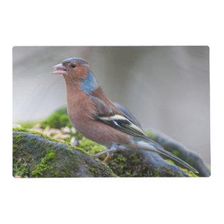 Chaffinch Wild Bird Laminated Placemat