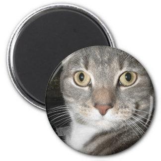 Chairman Meow Fridge Magnets