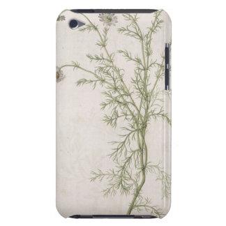 Chamaemelum nobile Allioni, c.1568 Barely There iPod Case