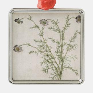 Chamaemelum nobile Allioni, c.1568 Christmas Ornament