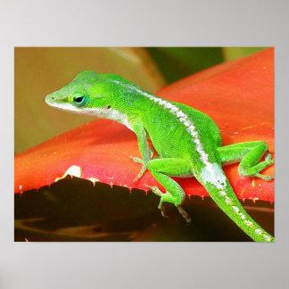 Chameleon 1 poster