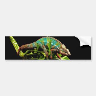 Chameleon Bumper Sticker