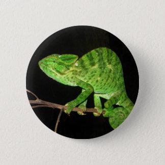 Chameleon (Chamaeleo zeylanicus) 6 Cm Round Badge