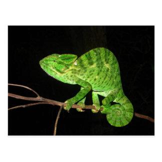 Chameleon (Chamaeleo zeylanicus) Postcard