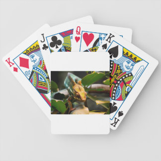 Chameleon coming forward bicycle playing cards