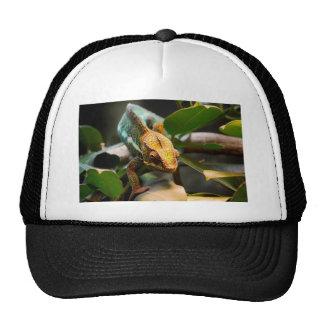 Chameleon coming forward cap
