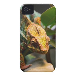 Chameleon coming forward iPhone 4 covers