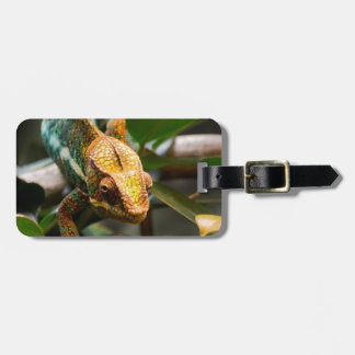 Chameleon coming forward luggage tag