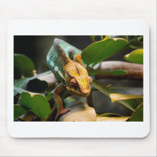 Chameleon coming forward mouse mat