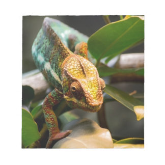 Chameleon coming forward notepad