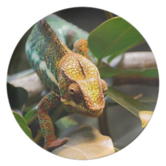Chameleon coming forward plate