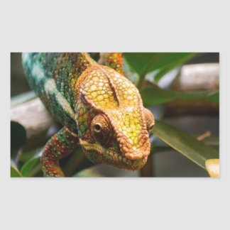 Chameleon coming forward rectangular sticker