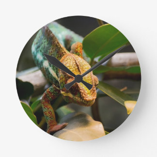 Chameleon coming forward round clock