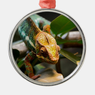 Chameleon coming forward Silver-Colored round decoration