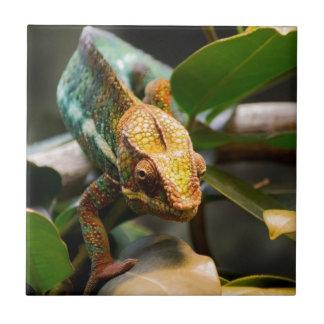 Chameleon coming forward tile