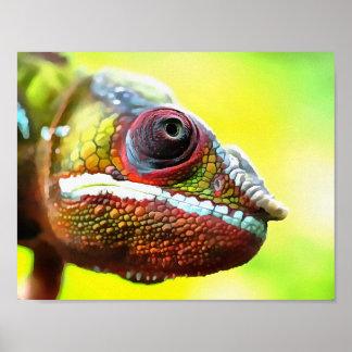 Chameleon Face Poster