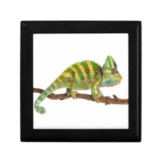 Chameleon Gift Box
