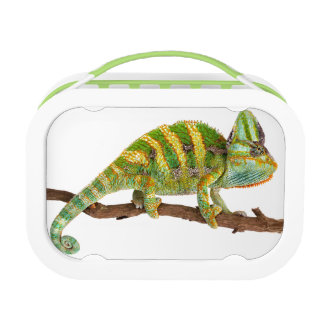 Chameleon Lunch Box