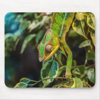 Chameleon Mouse Mat