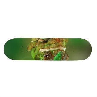 Chameleon Photo Skateboard