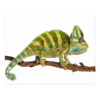 Chameleon Postcard