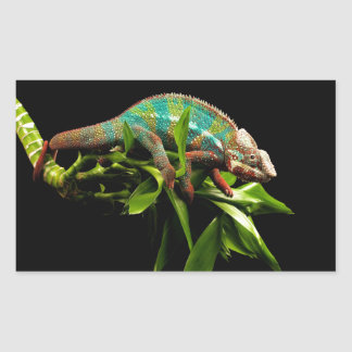 Chameleon Rectangular Sticker