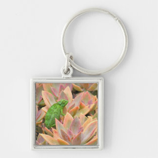 """""""CHAMELEON RESTING ON SUCCULENT PLANT"""" Silver-Colored SQUARE KEY RING"""