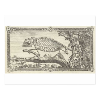 Chameleon Skeleton Illustration Postcard