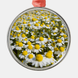 Chamomile Field, Hungary Silver-Colored Round Decoration