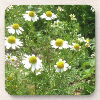 chamomile Flowers Drink Coasters