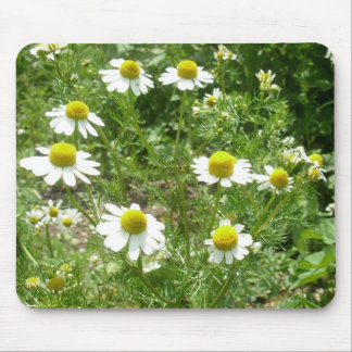 chamomile Flowers Mouse Pad
